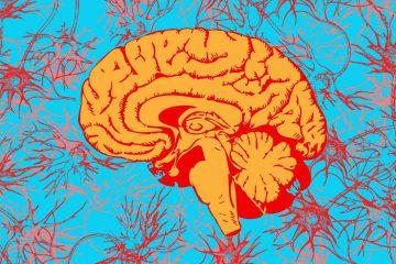 beyin, kafa, sinir, beyin lobları, nöron