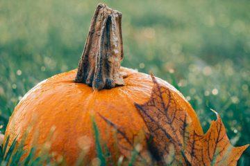 Ekim, kabak, bal kabağı, balkabağı, cadılar bayramı