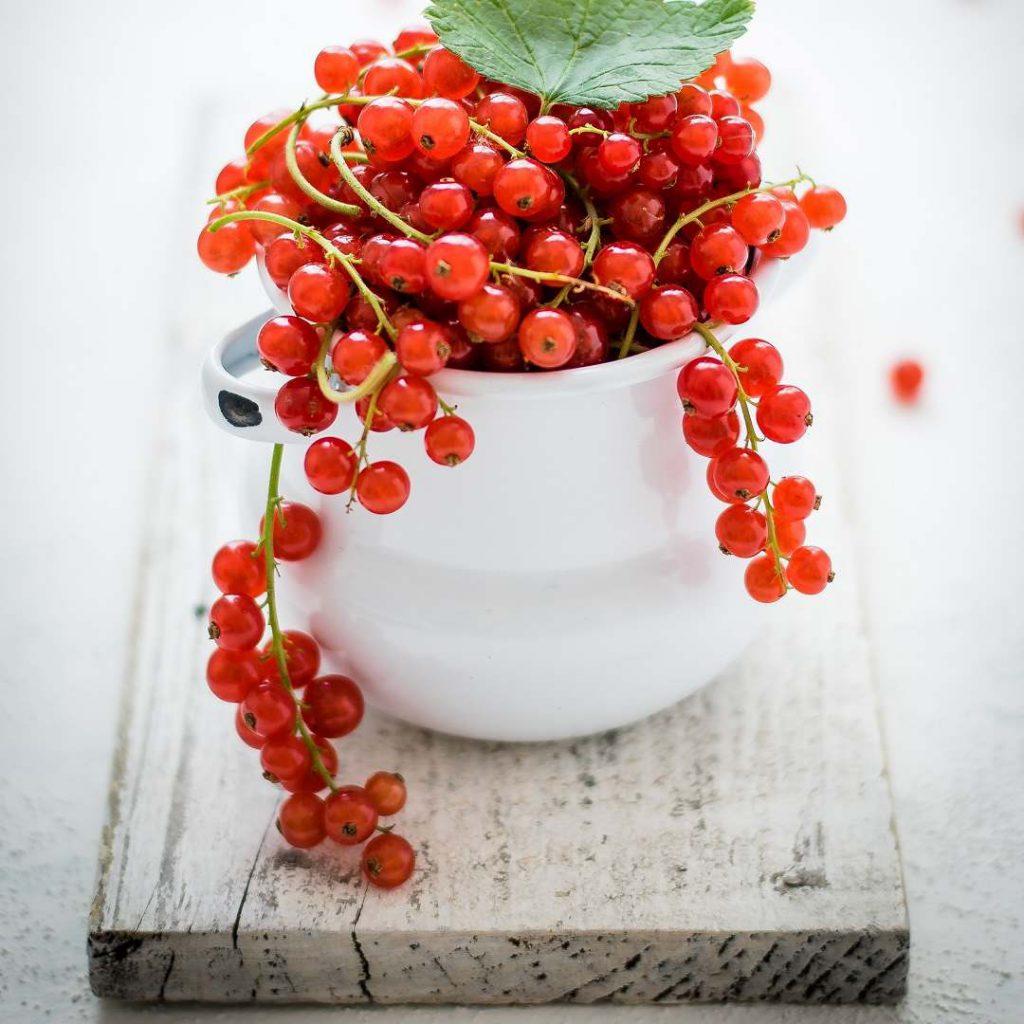 Frenk üzümü, fransız üzümü, fransa üzümü, kırmızı meyveler, kırmızı üzüm