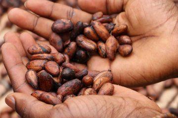 dry beans, kuru baklagil, baklagiller, kurubaklagil, fasulye, emek, el