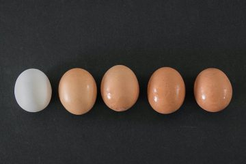 yumurta, sarı yumurta, beyaz yumurta