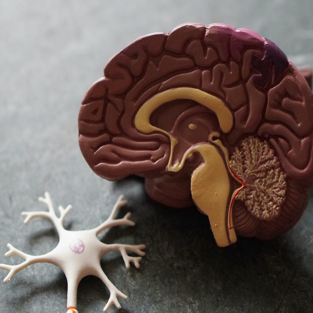 beyin, nöron, sinir