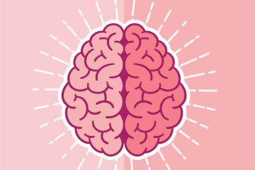 beyin, sağ beyin, sol beyin, beyin çalışması,