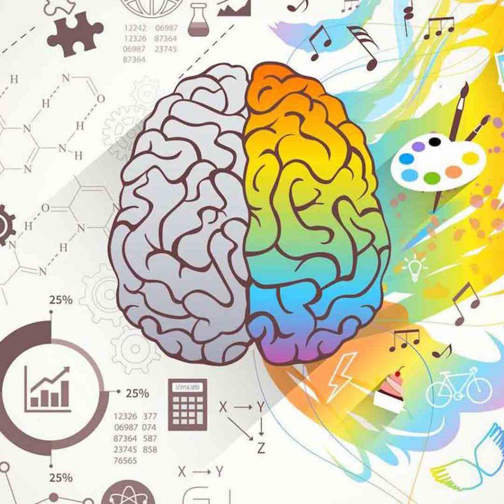 beyin, sağ sol beyin, yarım küreler, beynin farklı çalışması