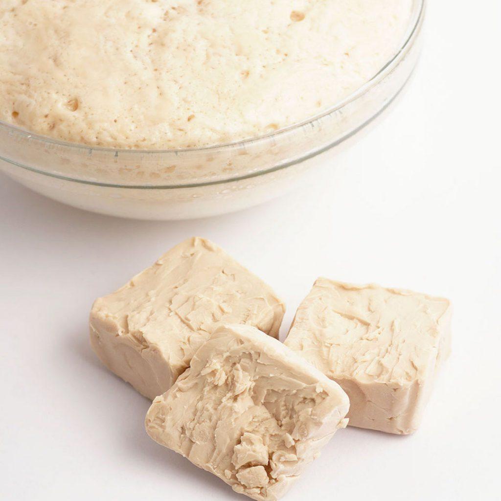 ekmek mayası, yeast, maya