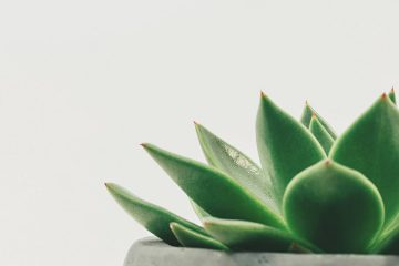 Diyetinizde bitkilere yer açın, google ekitaplar