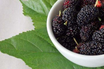 karadut, kara dut, mulberry, beriler