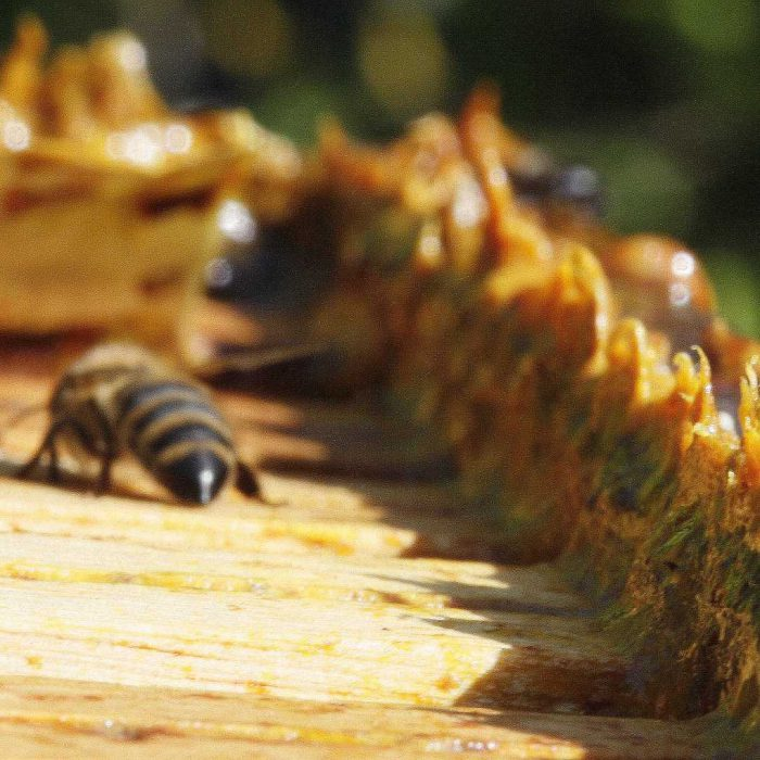 propolis, arı, bal, petek