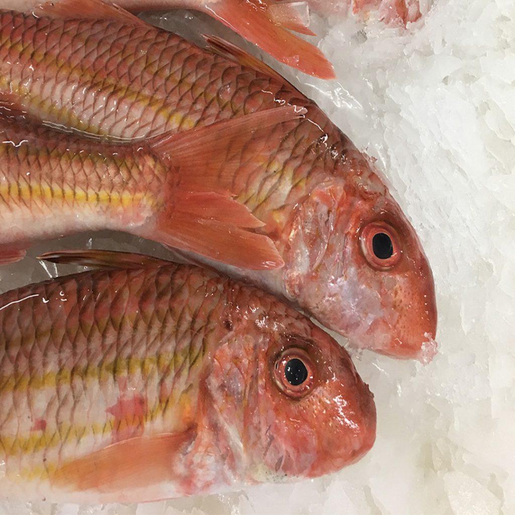 tekir balığı, tekir