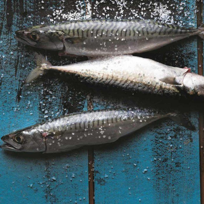 uskumru balığı, balık