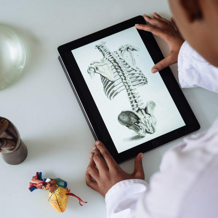 Anatomi, kalp, iskelet, kaburga, kalça