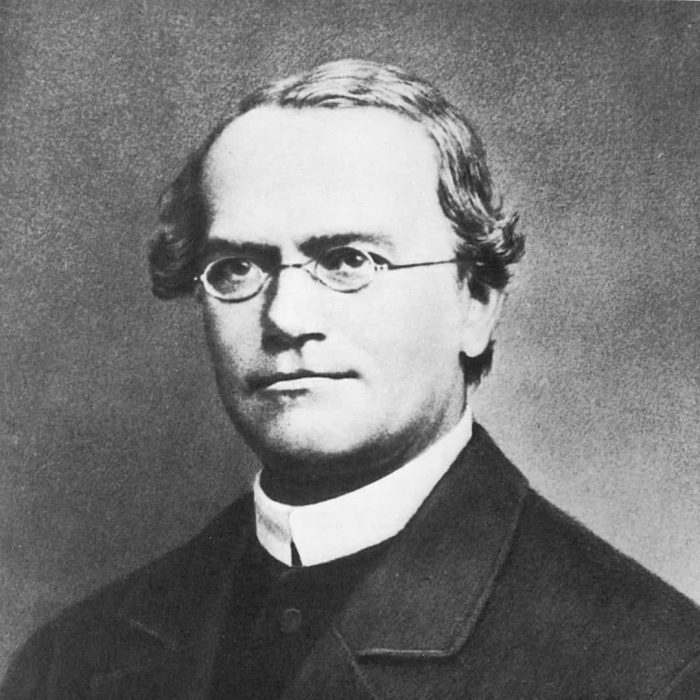 Gregor Mendel, genetik, kalıtım, bezelye