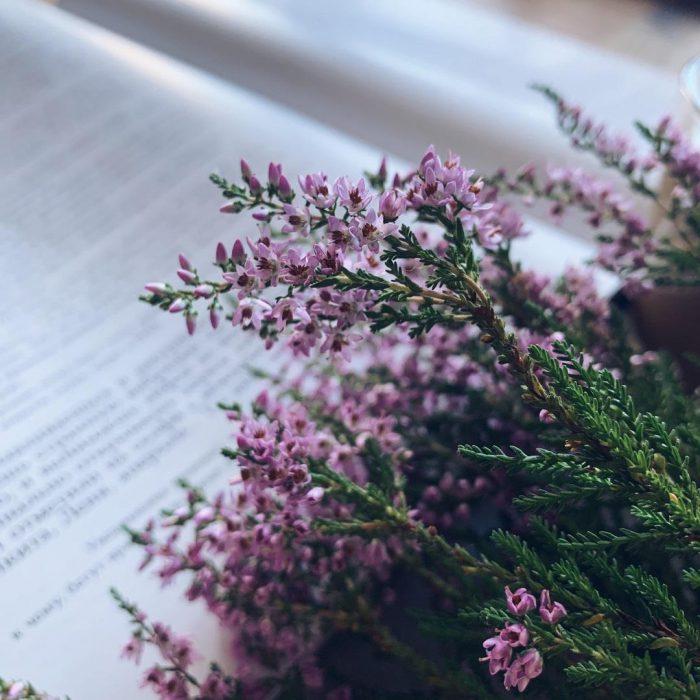 kitap, Lavandula angustifolia, lavanta, birki, mor, çiçek, yeşil