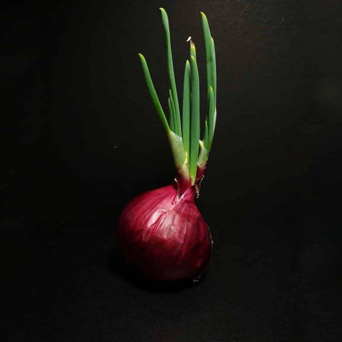 filizlenen soğan, siyah, kuru soğan, yeşil bitki