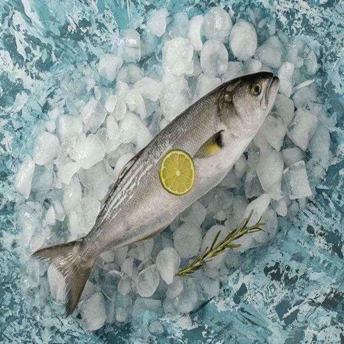 kofana, büyük lüfer balığı