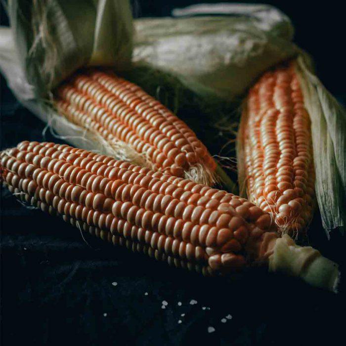 mısır, püskül, koçan, darı