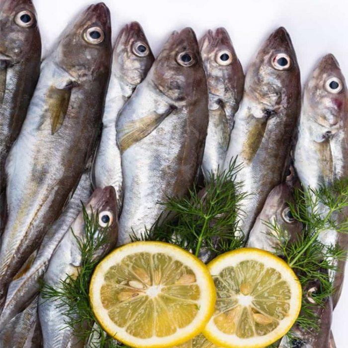 mezgit balığı, balık