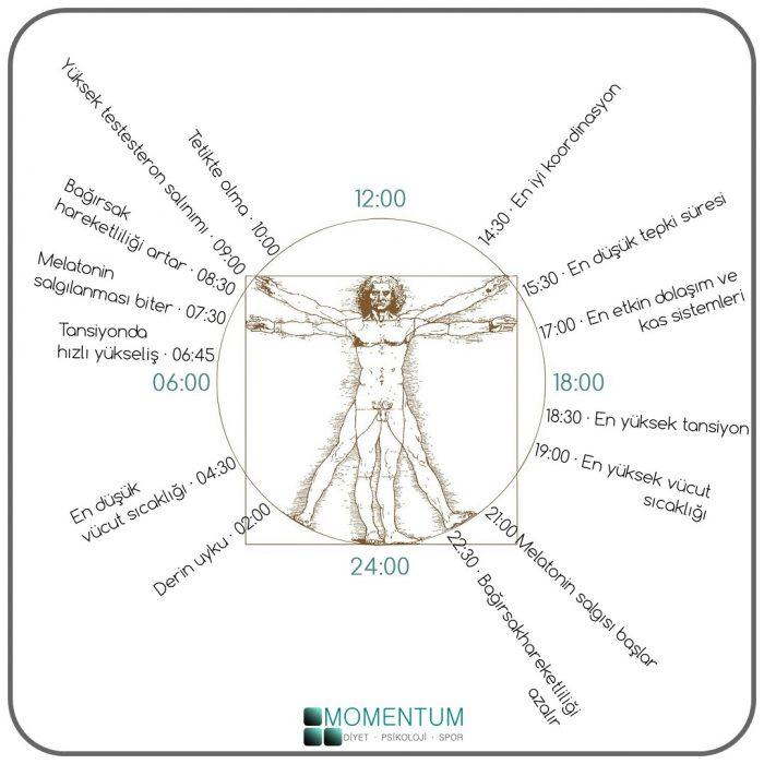 Leonardo da vinci, vitruvius adamı, biyoritim, biyolojik saat, krononütrisyon, Vitruvian Man, Leonardo Da Vinci
