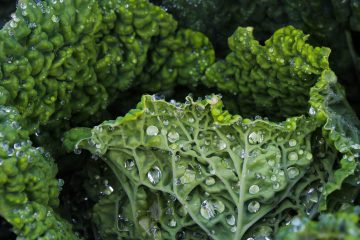 kale sebzesi, kale bitkisi, kale yaprağı, kale lahanası, kale sebzesi, kale yeşilliği