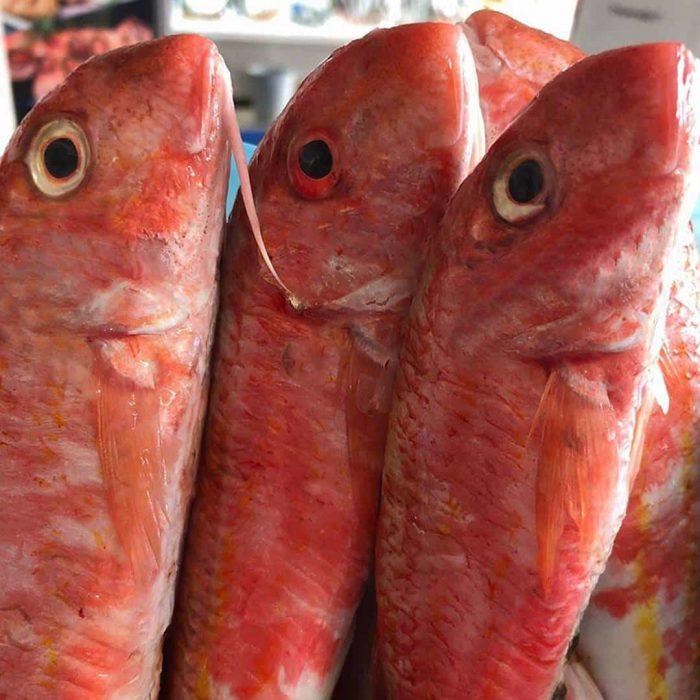 barbun balığı, barbunya, büyük tekir