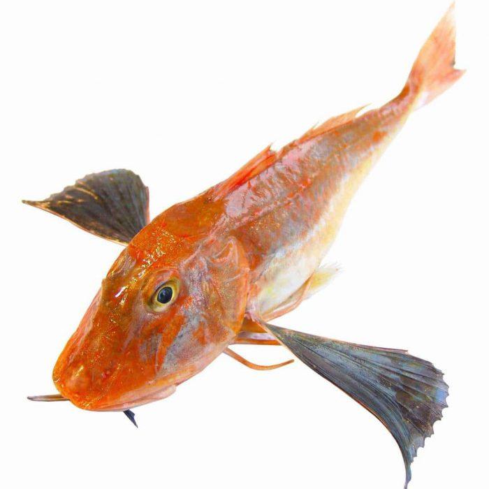 kırlangıç balığı, balık