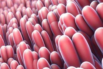 mikrovillüs, villi, ince bağırsak villus yapıları, sindirim, emilim