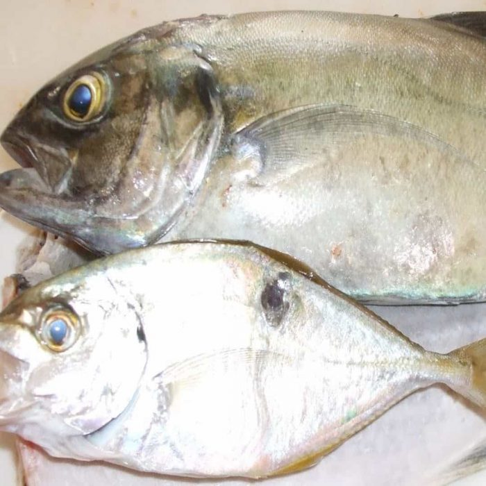 akya balığı, balık