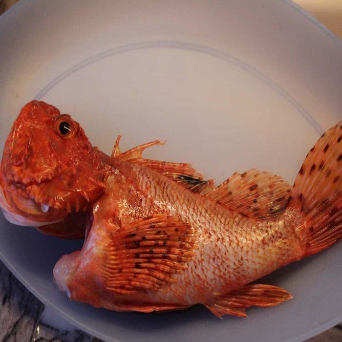iskorpit balığı