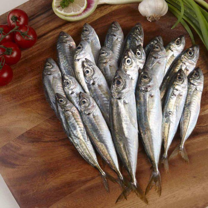 istavrit balığı, balık
