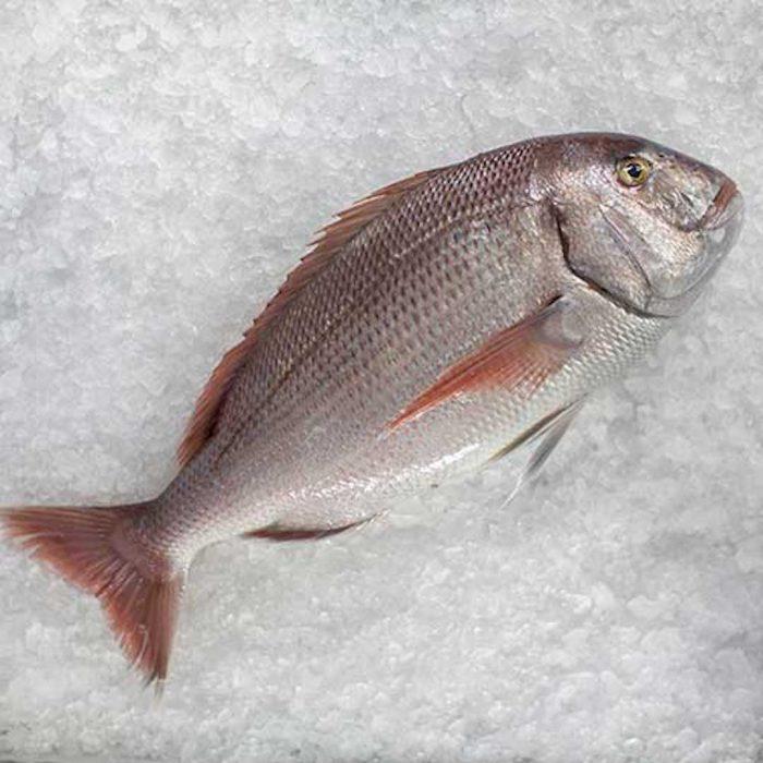 mercan balığı, balık