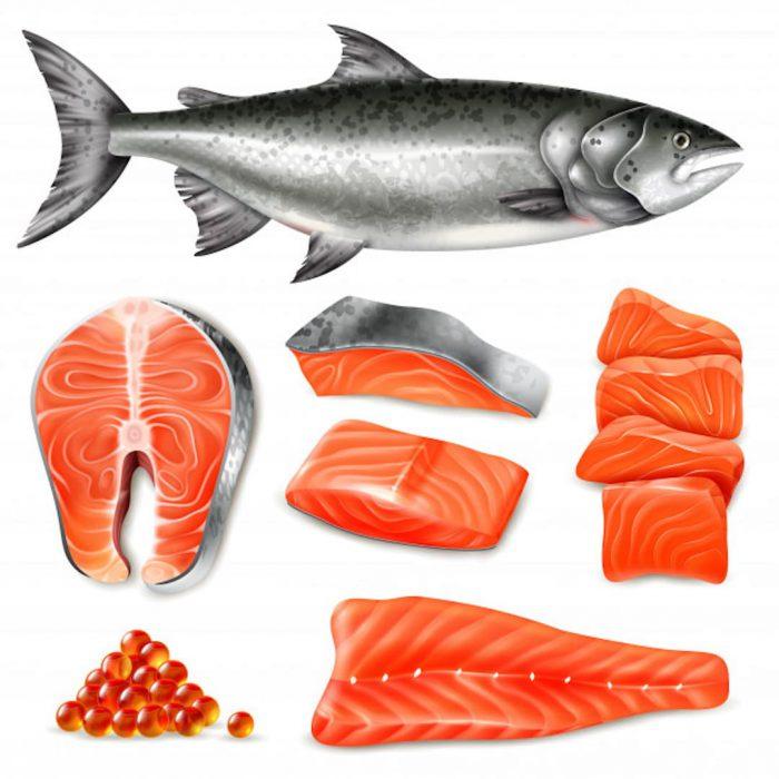 somon balığı, salmon balık