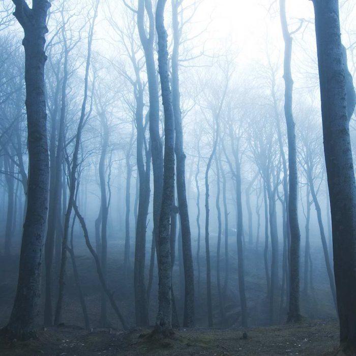 ağaç, sis, korku, orman, doğa, görsel